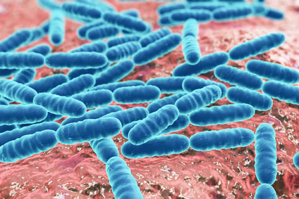 Laktobazillen unterstützen das Immunsystem